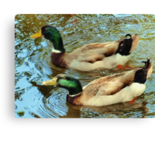Duck pair Canvas Print
