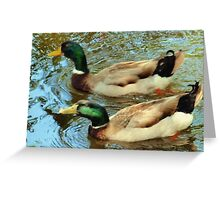 Duck pair Greeting Card
