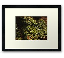 The Hidden Land - The Green Gully Framed Print