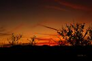 Southwest Amber Fading Glow by Vicki Pelham
