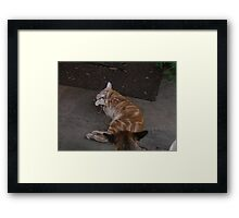 Finders keepers...........looser! Framed Print