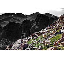 Mountainside Goats Photographic Print