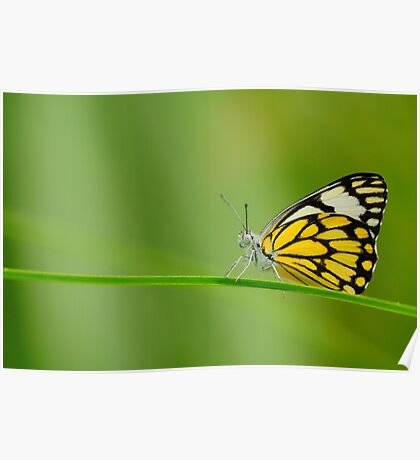 Pioneer Butterfly Poster