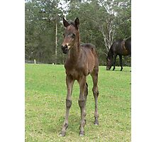 """""""Calamity"""" - Thoroughbred Filly Photographic Print"""