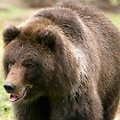 Grizzly on the Run by Lisa G. Putman