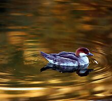 Luminous Smew by Lisa G. Putman