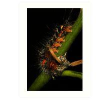 Spitfire Caterpillar Art Print