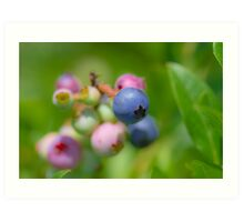 Blueberry fruit Art Print