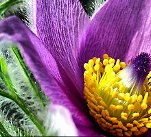 Flower Power by naturelover