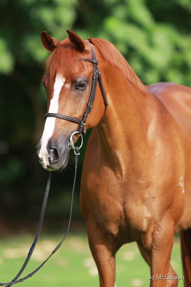 Bright Chestnut Horse Portrait by Jo McGowan