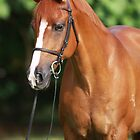 Bright Chestnut Horse Portrait by Jo McGowan