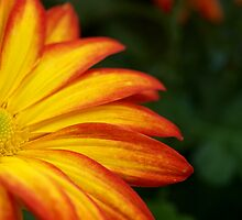 Is it  Half-Empty or Half-Full? by tigerwings