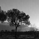 Sunset In The Desert by Joanna Beilby
