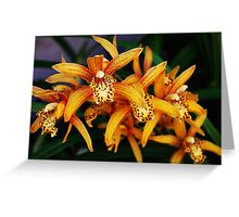 Autumn Cymbidium Greeting Card