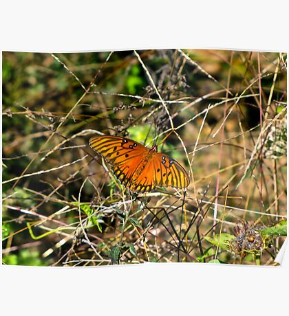 Flame Colored Insect  Poster