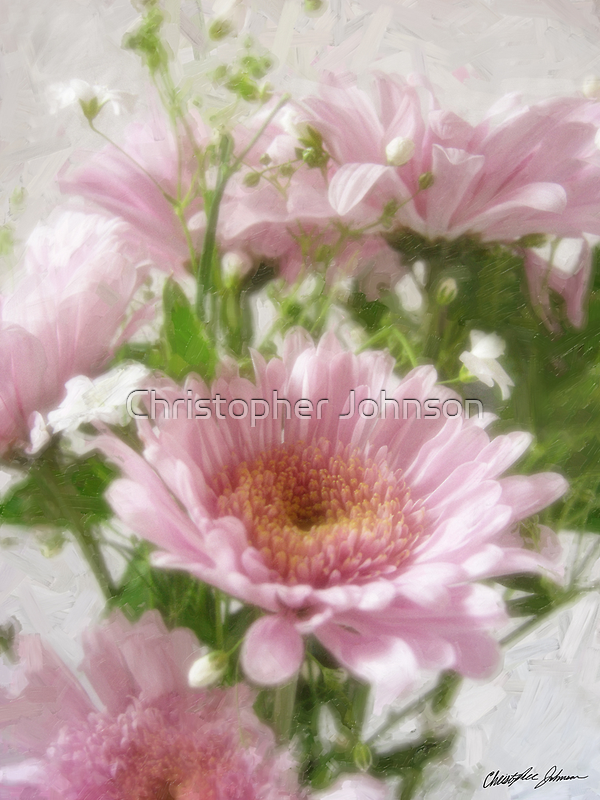 Pink Chrysanthemums 5 Elegance by Christopher Johnson