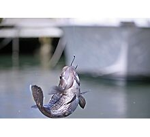 Sea Bass Photographic Print