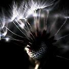 dandelion close up by AnaBanana