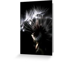 dandelion close up Greeting Card