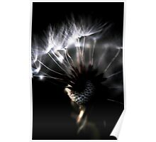 dandelion close up Poster