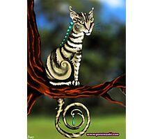 Tabby cat Photographic Print