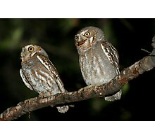 Elf Owl, Micrathene Whitneyi Photographic Print