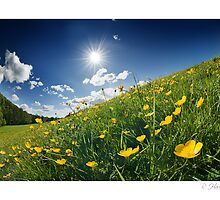 Buttercup Wave - Homer, nr Much Wenlock by rharris-images