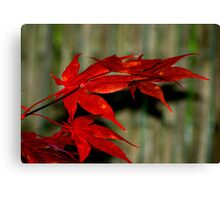 Red Maple, Green Bamboo Canvas Print