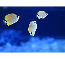 Tropical Fish Photographic Print
