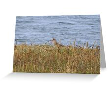 A Curlew Calls Greeting Card