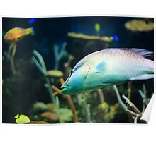 Big Tropical Fish Poster