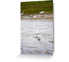 White Crane in Wetlands Greeting Card