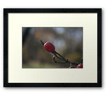 The Little Red Ball Framed Print