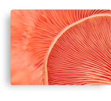 Marvelling the Mushroom Canvas Print