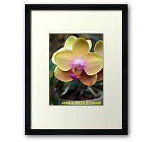 Blushing Blond Framed Print