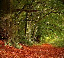 Stanstead Trees in Autumn by lightmonger