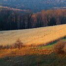 November Evening in Pennsylvania by vigor