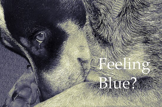 Feeling Blue? by Eve Parry