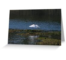 An Egret Fishing Greeting Card