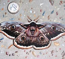 Moth on a footpath by Elena Kolotusha