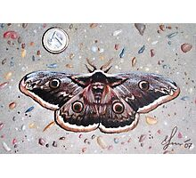 Moth on a footpath Photographic Print
