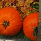 Pumpkins in the Rain by Virginia Shutters