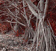 Pandanus Grove II by SeaShell