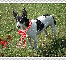 Christmas Card, Rat Terrier by Rosalie Scanlon