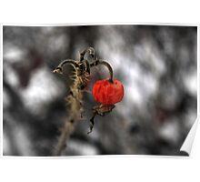 'cherry bomb'..Winters cruel harvest Poster