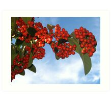 Colorful Berries for Christmas Art Print