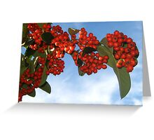 Colorful Berries for Christmas Greeting Card