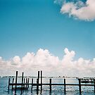 SCENERY IN FT. MYERS, FLORIDA by MsLiz