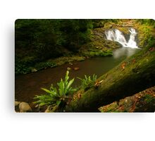 Amazonian Oz Canvas Print