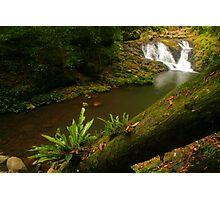 Amazonian Oz Photographic Print